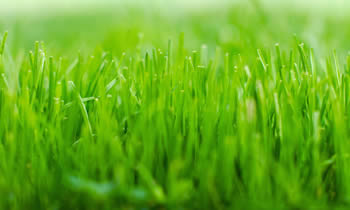 Lawn Service in Thornton CO Lawn Care in Thornton CO Lawn Mowing in Thornton CO Lawn Professionals in Thornton CO
