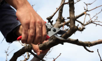 Tree Pruning in Thornton CO Tree Pruning Services in Thornton CO Quality Tree Pruning in Thornton CO
