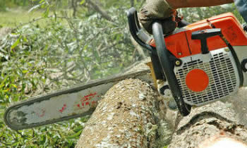 Tree Removal in Thornton CO Tree Removal Quotes in Thornton CO Tree Removal Estimates in Thornton CO Tree Removal Services in Thornton CO Tree Removal Professionals in Thornton CO Tree Services in Thornton CO