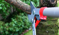 Tree Pruning Services in Thornton CO